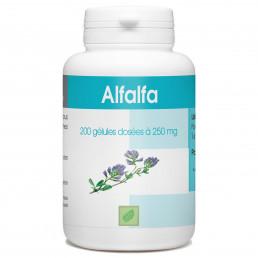 Alfalfa - 250 mg - 200 gélules