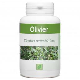 Olivier Feuille - 210 mg - 200 gélules