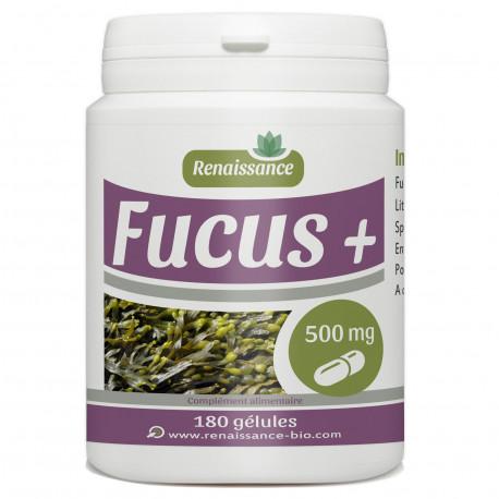 Fucus + 500mg - 180 Gelules - Renaissance-Bio