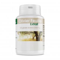 Olivier Extrait Sec de Feuille - 500 mg - 100 gélules