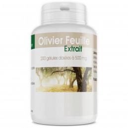 Olivier Extrait Sec de Feuille - 500 mg - 200 gélules